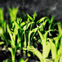 ground growth green iwonderwhatitwillbe suprise freetoedit