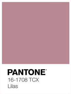 pink pantone colour pantonebackgrounds blush freetoedit