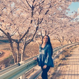 freetoedit spring cherryblossom korea girl