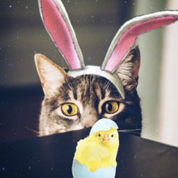 freetoedit happyeaster easter bunnyears cat
