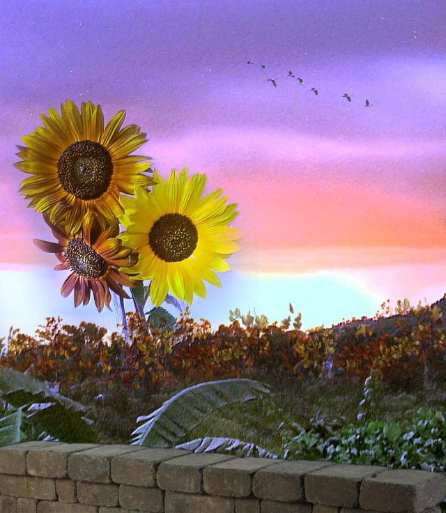 #freetoedit #vipshoutout #myedit #madewithpicsart  #landscape #flowers #sky