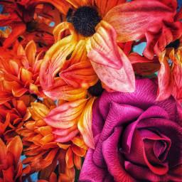 indoorphotography flower flowerphotography rose
