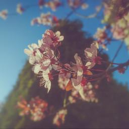 photo flower spring blossoms