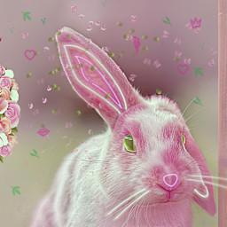 bunny pink pretty easter madewithpicsart freetoedit srcbunnyears bunnyears