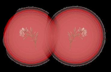 freetoedit blush flower aesthetic flowers