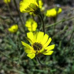 myphoto photography plants flowers green freetoedit