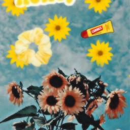 sunflower vsco scrunchie carmex honey freetoedit
