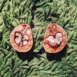 freetoedit walnut carpet food