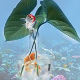 freetoedit fish koifish fishes sea ecwalldecorations walldecorations