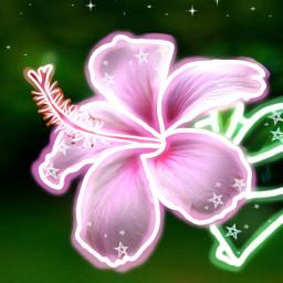 glowingeffect glowing glow shine pink freetoedit