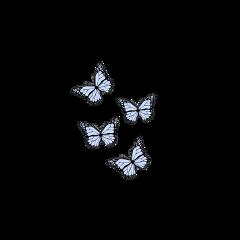 freetoedit butterfly butterflyaesthetic summer blue