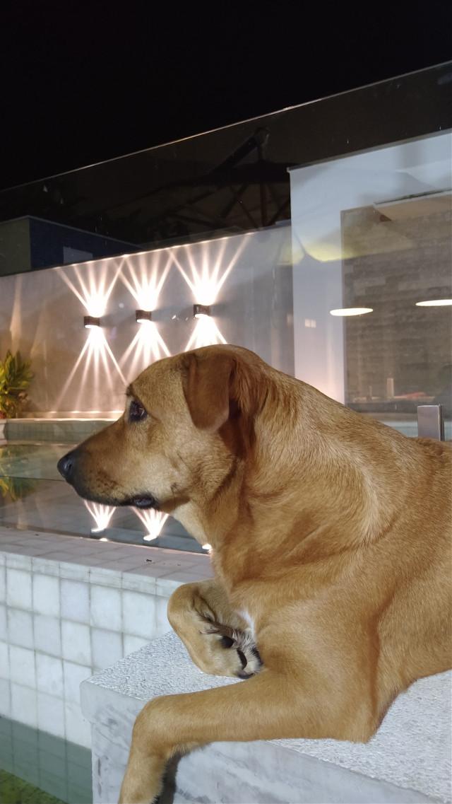 #dog #loveit #beautifuldog