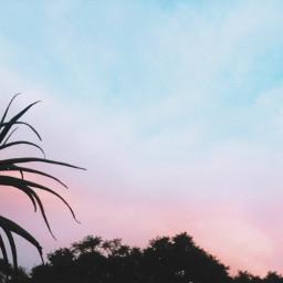 sunset nature nostalgic southafrica