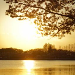 japan nature dusk sunset spring