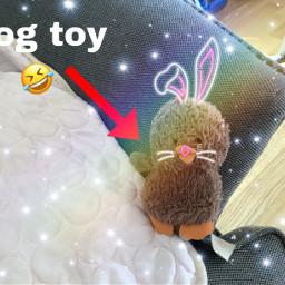 freetoedit dogtoy bunnystickers srcbunnyears