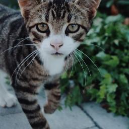 cat cutie interesting nature photography freetoedit