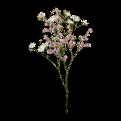 aesthetic flower flowers pink эстетика freetoedit