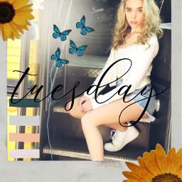freetoedit jennadavis bluebutterfly sunflower tuesday