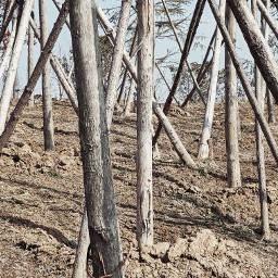 trees woodland freetoedit