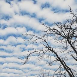 clouds sky tree freetoedit