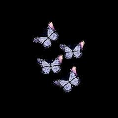 freetoedit shimmer sparkle glitter butterfly