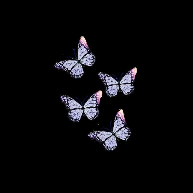 #freetoedit #shimmer #sparkle #glitter #butterfly #butterflyaesthetic #butterflyart #summer