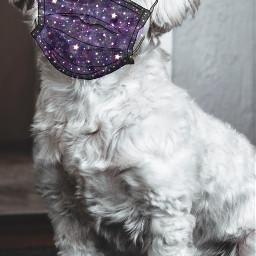 freetoedit mask maskchallenge puppydog cute ecmasktogether masktogether wearamask