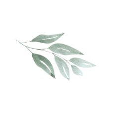 leaves tropical aesthetic plants doodle freetoedit