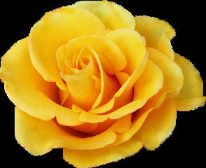 flower yellow aesthetic freetoedit