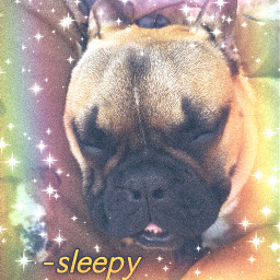 frenchbulldog sleeping rainbow puppy animals freetoedit