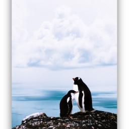 freetoedit animals penguins sky family