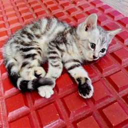 cats catlovers catsphotography catsofpicsart pet