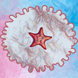 freetoedit starfish ocean cute star