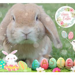 unsplash freetoedit easter bunny cute