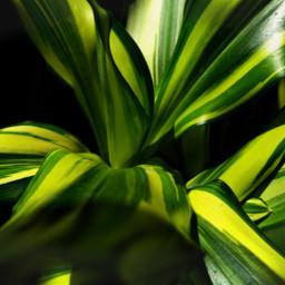 green plant leaves greenminimalism macro pcgreenminimalism