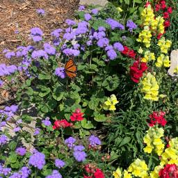 butterfly flowers garden freetoedit