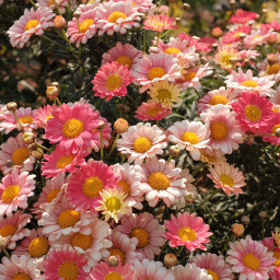 naturephotography flower tumblr picsart