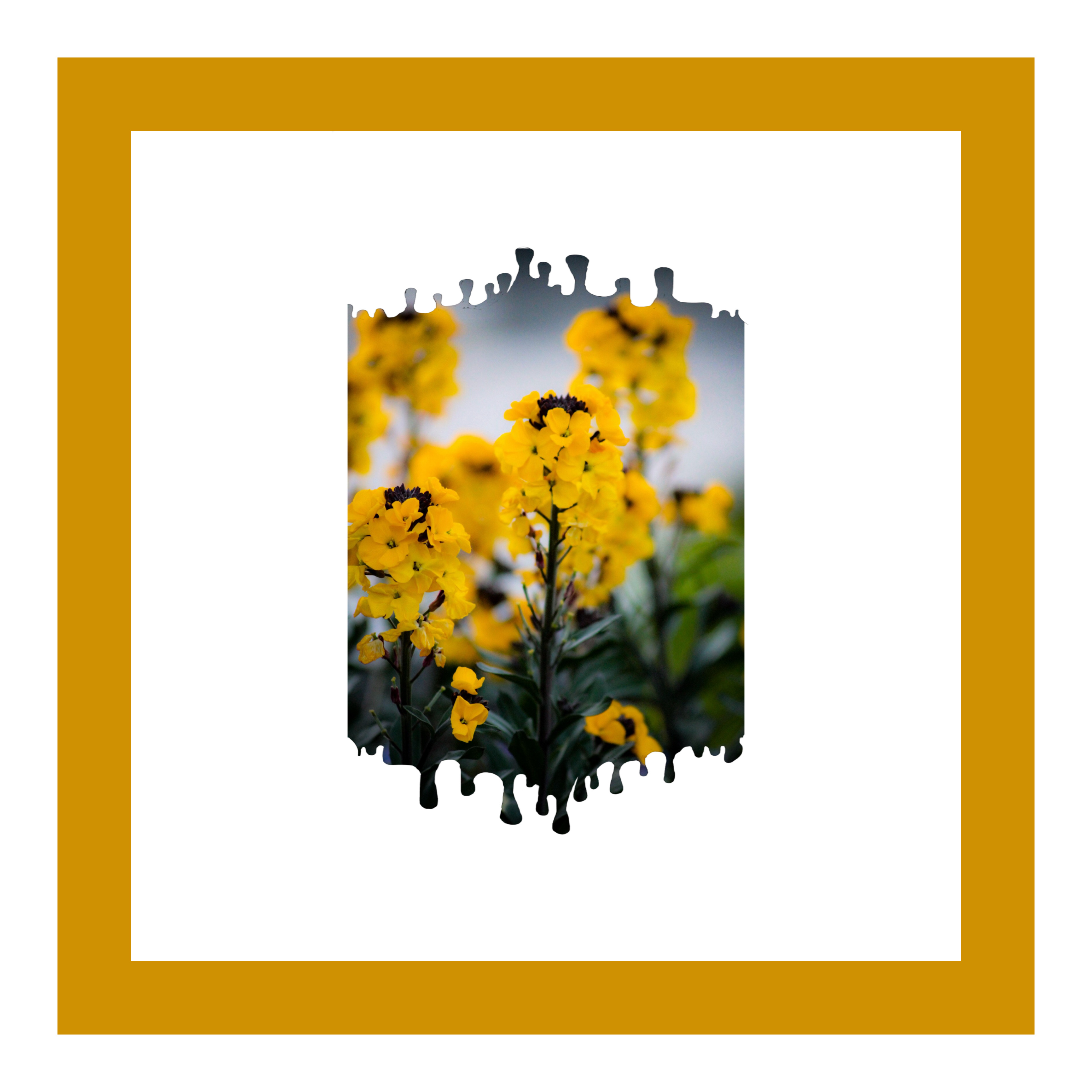 #freetoedit #goldenrod #yellow #love