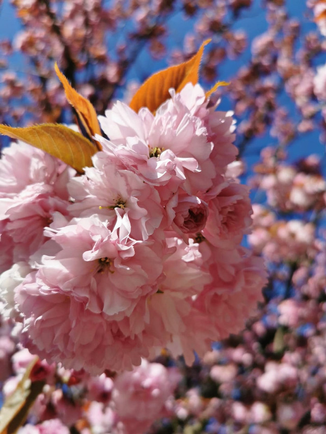 #freetoedit#photo#photography#spring#mrlb2000#beautiful @pa @freetoedit