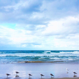 nature beachwalk seagulls row wavescrashing freetoedit