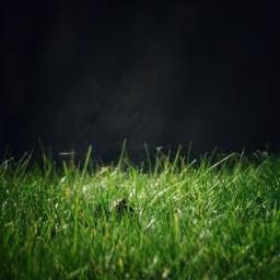 green grass photography myphoto freetoedit pcgreenminimalism greenminimalism