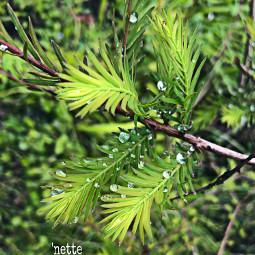 freetoedit myoriginalphoto dewdrops pcgreenminimalism greenminimalism