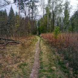 nature road forestroad forest spring freetoedit