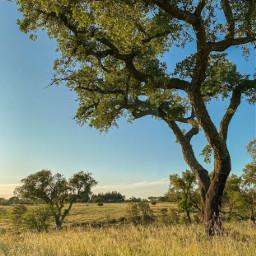 beautifulmorning countryside landscape nature wildplants freetoedit