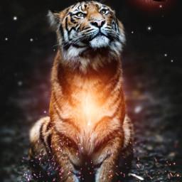 tiger digitalart fire butterfly glowing freetoedit