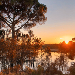thesungoesdown nature lakeview wildplants trees freetoedit