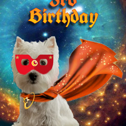 freetoedit happybirthday dog westie westies