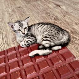 catsofpicsart catislove catlover furbaby catlove♥