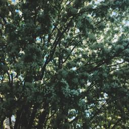 flowers tree mayday may freetoedit