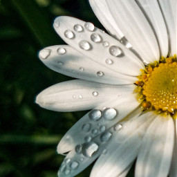 photography flower mypic waterdrops spring freetoedit